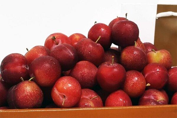Ngoài ra các bạn có thể thay bằng quả táo gai, kiwi, táo, đào