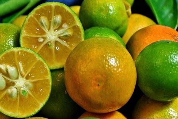 Quất xanh hay quất vàng cam đều rất ngon.