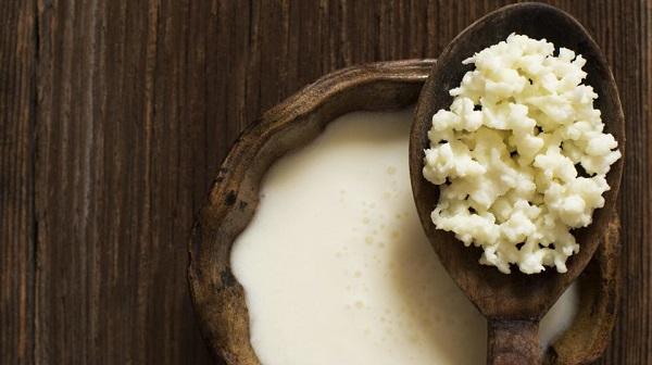 Kefir là một loại nấm sữa của Tây Tạng