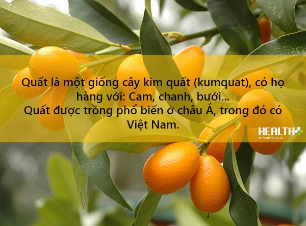 Trái Tắc, Quất, Hạnh - Citrus Microcarpa. Họ cam quít (Rutaceae)