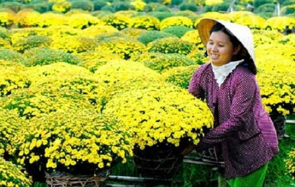 Hoa cúc – tình cảm ấm áp và mãi mãi bền lâu