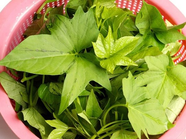 Nên chọn loại rau lang tươi xanh.