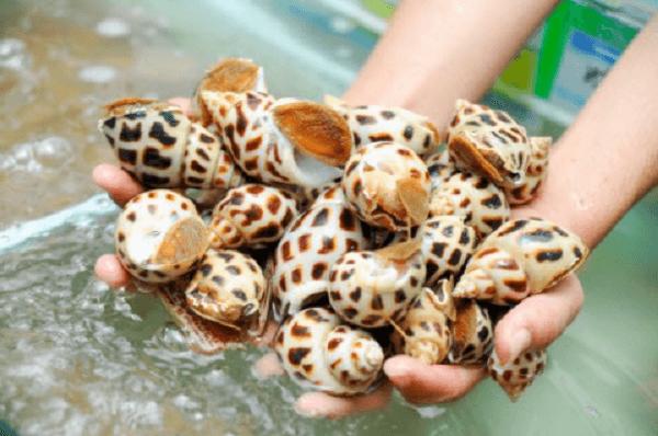 Cách chọn các loại ốc, sò