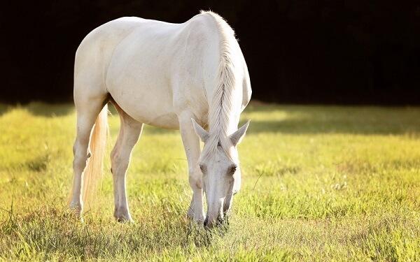 Chà, bộ lông chú đẹp quá! trắng muốt như màu của những đám mây trắng ngày thu bồng bềnh trôi.