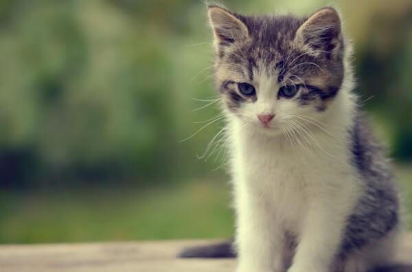 Chuyện kể về những kỷ niệm đối với một con vật nuôi