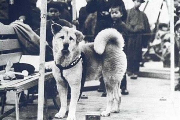 Con chó Hachiko