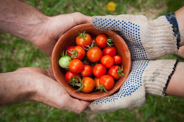 Ăn cà chua có tốt không, một ngày nên ăn mấy quả cà chua