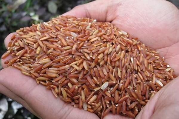 Nếu chỉ nhìn sơ qua thì bạn sẽ thấy gạo lứt và gạo huyết rồng có bề ngoài khá giống nhau