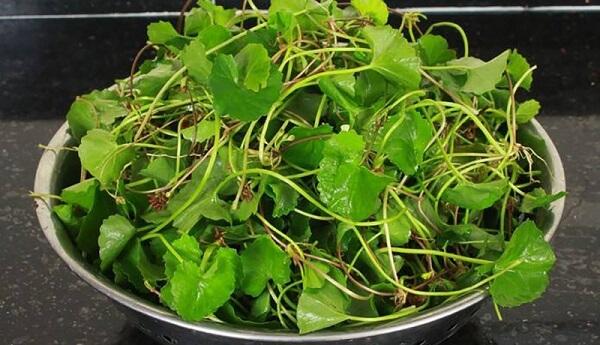 Tỷ lệ 1kg rau má xay bao nhiêu lít nước là chuẩn ngon