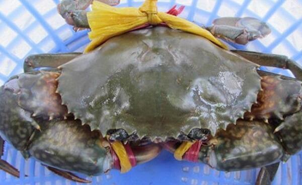 Cua biển mẹ nên ăn để bổ sung canxi cho con bú