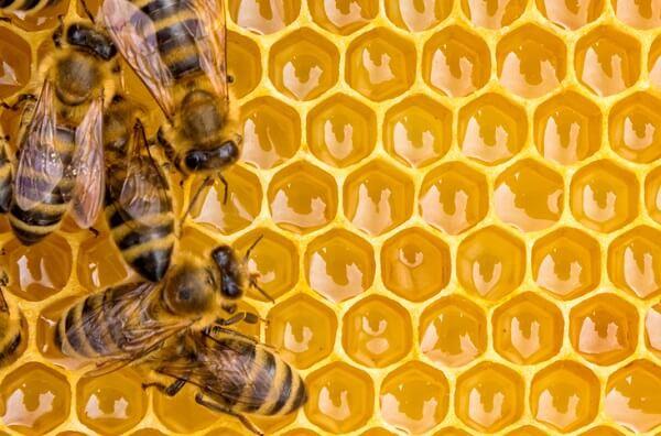 Mật ong - ăn gì bổ máu đẹp da