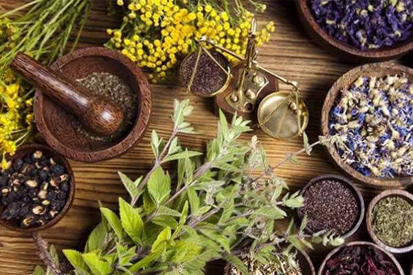 4 bài thuốc chữa đau bao tử, đau dạ dày dân gian hiệu quả nhất