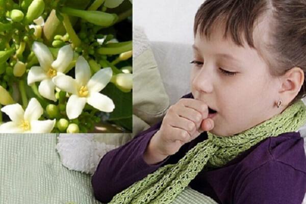 Bài thuốc hoa đu đủ đực hấp đường phèn chữa ho hiệu quả