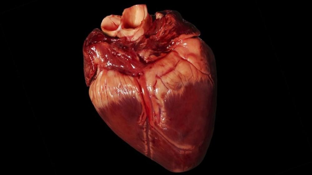 Món ăn từ tim lợn chữa đau dạ dày hiệu quả