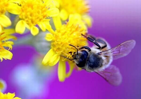 7 điểm phân biệt mật ong rừng khác mật ong nuôi như thế nào