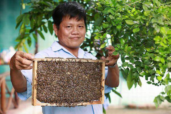 Tác dụng của mật ong rừng, cong dung của mat ong nguyen chat