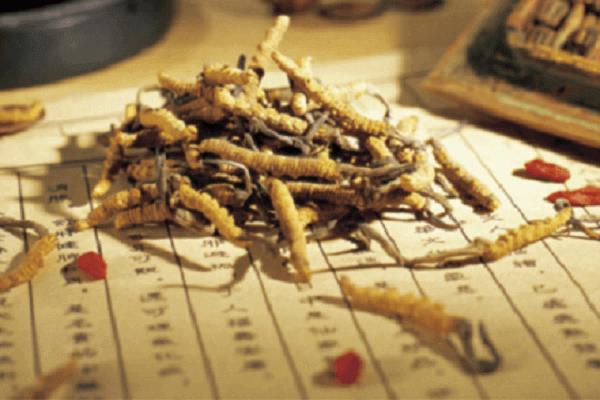 Đông trùng hạ thảo mang lại công dụng thần kỳ không phải ai cũng biết