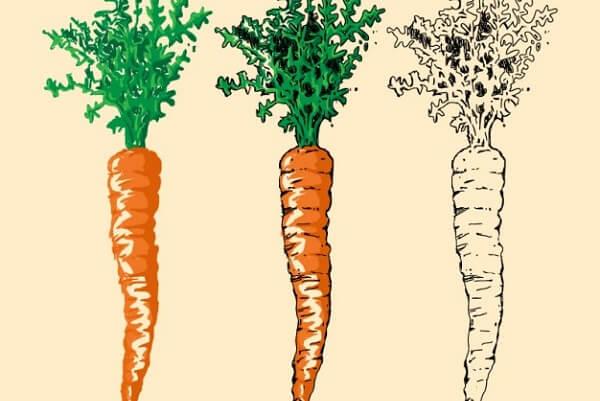 Cà rốt - Bà bầu ăn không tiêu phải làm sao, cách trị ăn không tiêu cho mẹ bầu