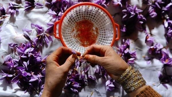Tác dụng của nhụy hoa nghệ tây, cách sử dụng nhụy hoa nghệ tây, cách dùng nhụy hoa nghệ tây