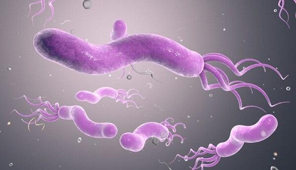 Để tiệt trừ vi khuẩn Hp cần phải sử dụng phác đồ phối hợp nhiều loại thuốc khác nhau