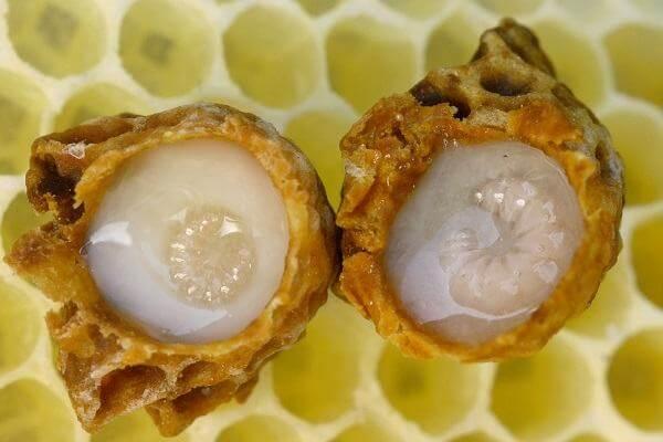 Bôi sữa ong chúa lên da đem đến nhiều công hiệu trong việc làm sáng da, trị mụn trứng cá. Giúp dưỡng da từ sâu bên trong, tiêu diệt tận gốc nguyên nhân hình thạnh mụn, tàn nhang, nám má trả lại cho chị em một làn da mịn màng, sáng khỏe.