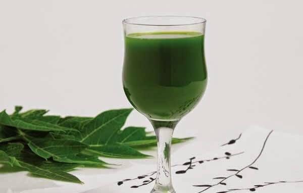 Uống nước lá đu đủ có hại không, có tác dụng gì, nên uống lá đu đủ tươi hay phơi khô