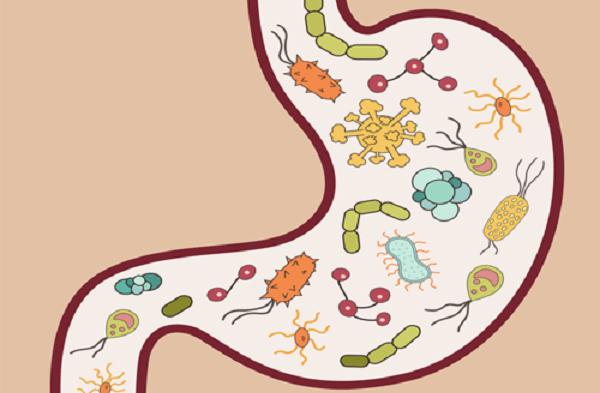 Lây nhiễm vi khuẩn HP qua đường dạ dày - dạ dày