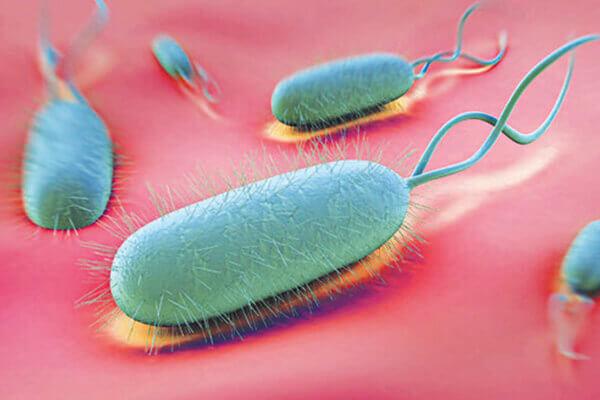 Vi khuẩn Hp gây nhiễm trùng dạ dày có thể làm tăng triệu chứng ợ hơi