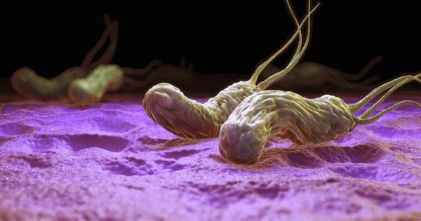 Vi khuẩn HP có gây ung thư dạ dày hay không?