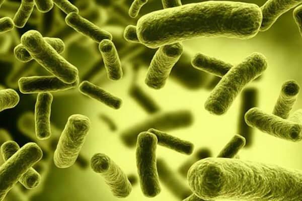 Vi khuẩn hp dương tính trong dạ dày – Kiến thức bạn nên biết