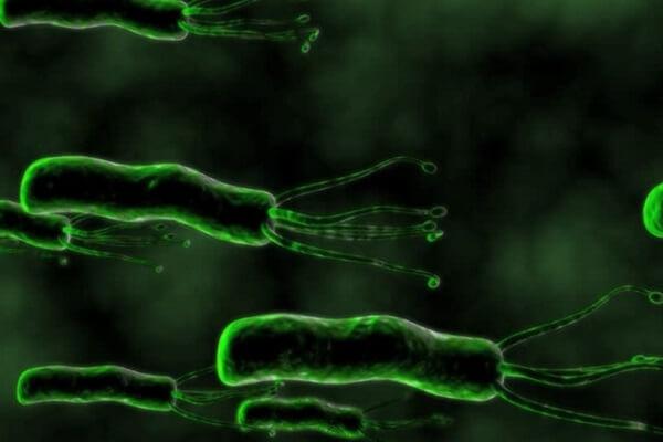 Dấu hiệu, triệu chứng nhiễm vi khuẩn, vi rút HP - Làm sao biết dạ dày bị nhiễm vi khuẩn Hp?