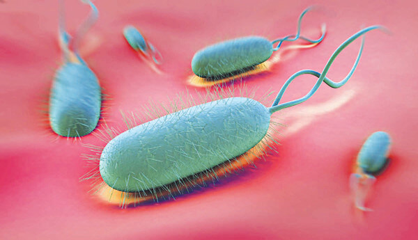 Vi khuẩn HP là gì, có lây không - Triệu chứng nhiễm vi khuẩn hp