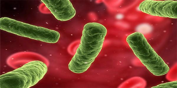Phát hiện vi khuẩn Hp - Vi khuẩn HP là gì, có lây không. Triệu chứng nhiễm vi khuẩn hp