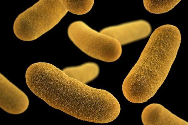 Vi khuẩn Escherichia coli có thể có trong thịt bò tái
