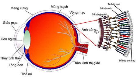 4 bác sĩ giỏi về Mắt và các bệnh liên quan đến mắt ở Tphcm