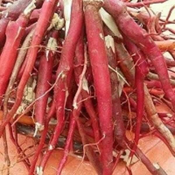Ở dạng củ còn nguyên, sâm bồng bồng thường rất nhẵn, vỏ đỏ hoặc cam. Phân nhánh rất nhiều. Thể chất củ mềm, nhiều nước.