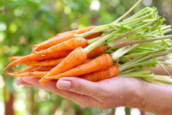 Các loại vitamin của cà rốt làm quá trình trao đổi chất diễn ra vô cùng mạnh mẽ, thúc đẩy quá trình đốt cháy mỡ thừa, giúp giảm cân nhanh