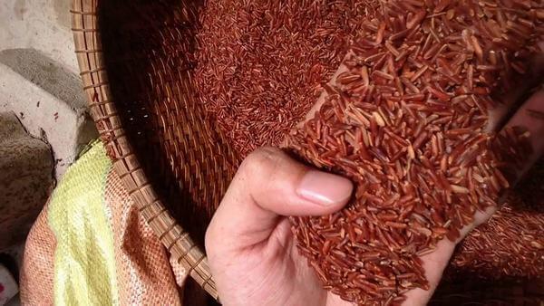 Gạo lức thường xay từ gạo thông thường, còn gạo lức huyết rồng là gạo có màu đỏ bên trong hạt gạo, xay từ một loại lúa có màu đỏ nâu