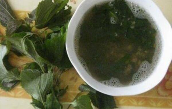 Uống nước lá tía tô khi chuyển dạ gúp dễ sinh có thật không?