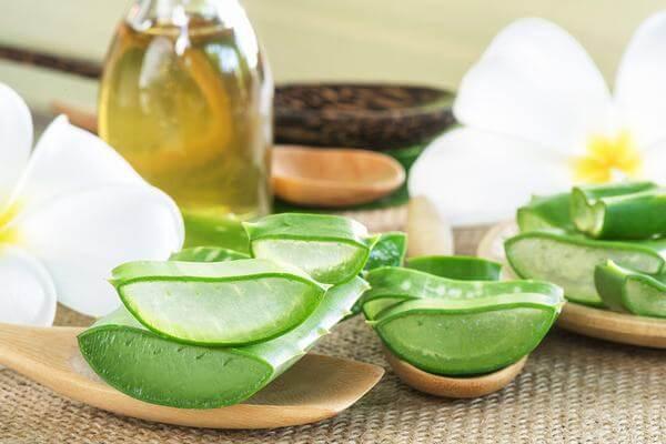 Cây Nha đam hay còn được gọi là cây lô hội là dược phẩm kỳ diệu từ thiên nhiên do lợi ích mà nó đem lại. Cây nha đam giup ngăn chặn mụn, chăm sóc da