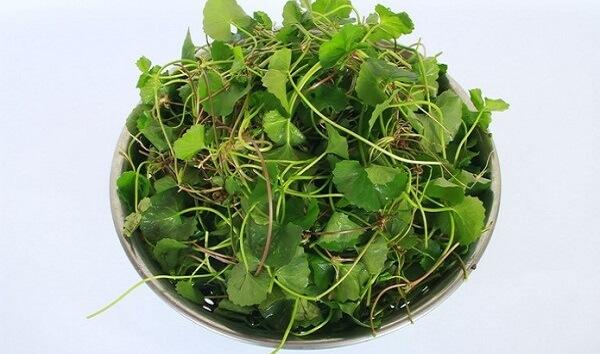 Cây rau má là loại rau khá phổ biến trong cuộc sống hàng ngày của hầu hết người dân Việt. Tuy nhiên không phải ai cũng biết rõ những công dụng chữa bệnh của nó