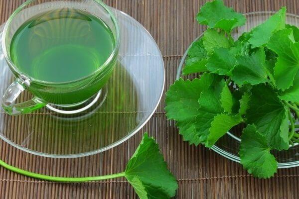 Tác dụng của rau má với sức khỏe, chữa bệnh, làn da và làm đẹp