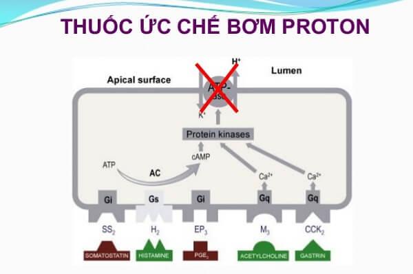 Hiện nay thuốc ức chế bơm Proton ( thuốc PPI) được sử dụng rất rộng rãi trong điều trị các bệnh lý ở dạ dày như ung thư dạ dày, viêm loét dạ dày
