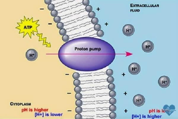 Thuốc ức chế bơm proton (PPI – Proton-pump inhibitor) xuất hiện trên thị trường từ những năm cuối thập kỉ 80 của thế kỉ trước