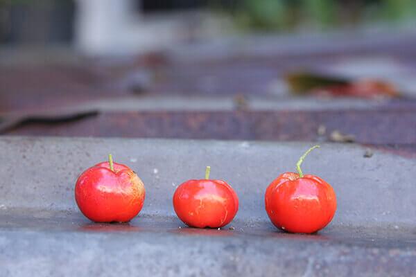 Cách làm mứt dẻo trái cây:Mứt sơ ri
