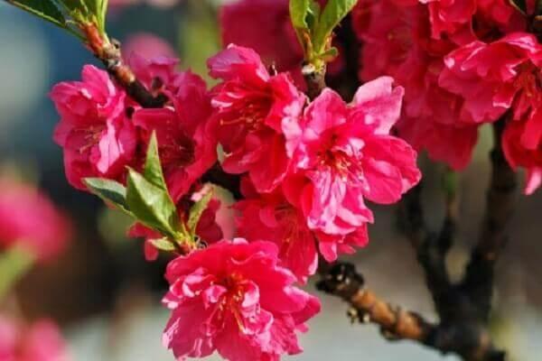 Ý nghĩa bông hoa cắm Tết