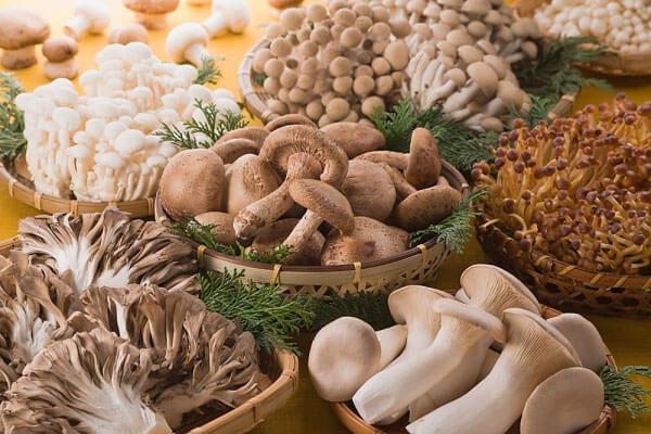 Nấm đóng một vai trò quan trọng trong hệ sinh thái – Tên, hình ảnh các loại nấm thông dụng ăn được, nấm độc ở Việt Nam