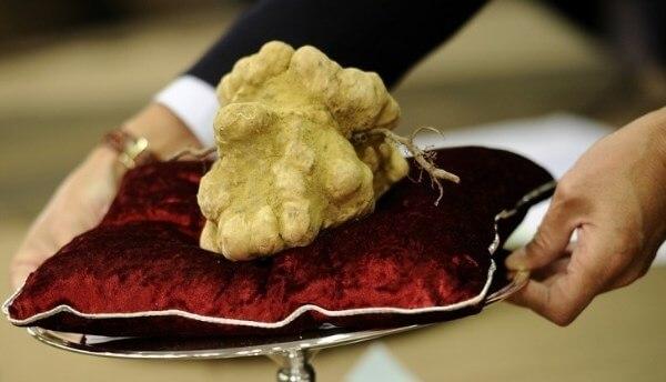 """Loại nấm Truffle này được giới nhà giàu trên thế giới rất ưa chuộng và sẵn sàng chi cả """"núi tiền"""" để được thưởng thức món ăn chế biến từ nó."""