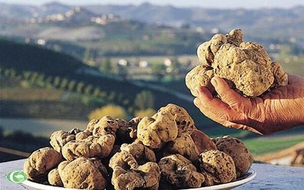 Dù ngoại hình xấu xí nhưng nấm Truffle lại làm thực khách siêu lòng vì hương vị và độ ngon.