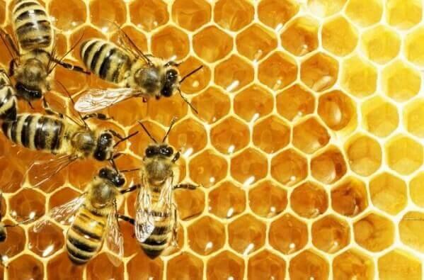 1 kg mật ong bằng bao nhiêu lít? Trọng lượng riêng của mật ong là bao nhiêu?